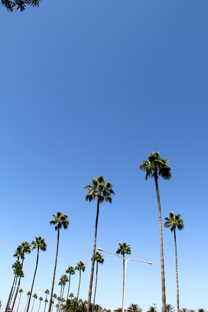 newport beach ca palm trees