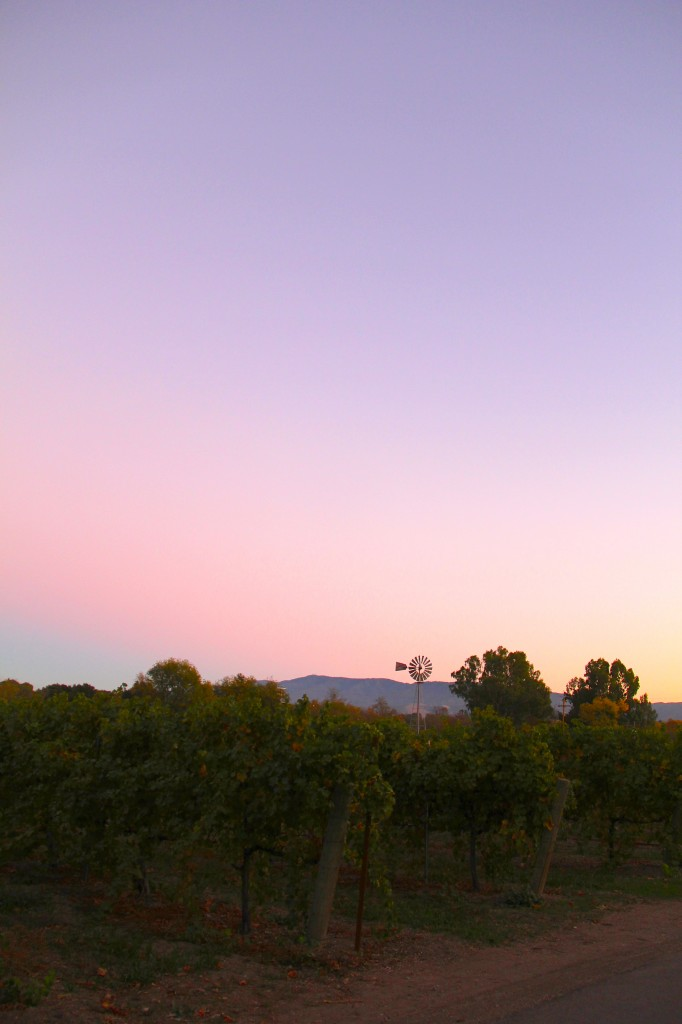 Sunset at Lincourt Winery
