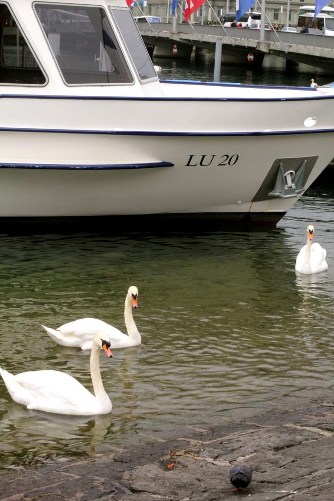Lake Lucerne Swans // itsy bitsy indulgences