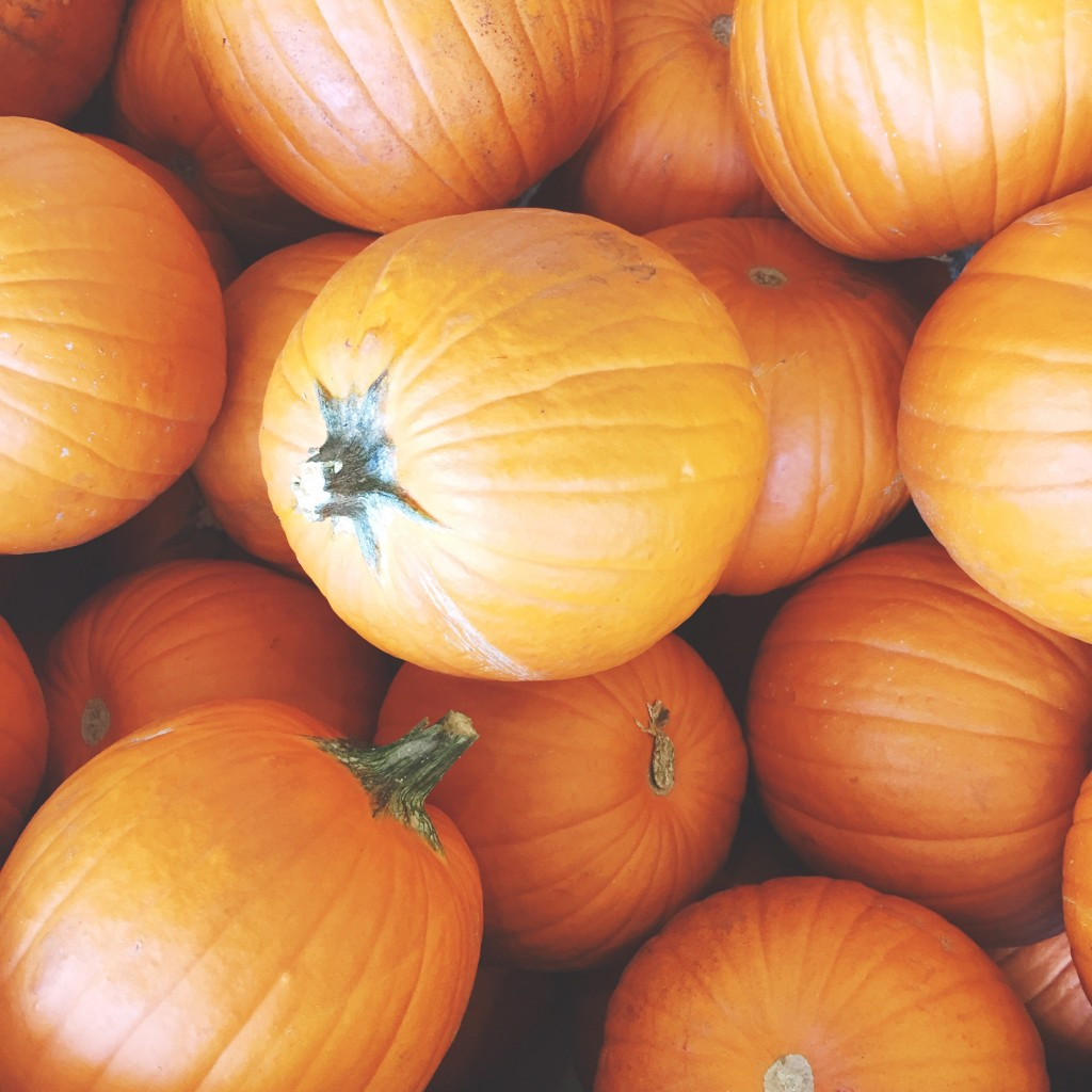fall pumpkins, itsy bitsy indulgences