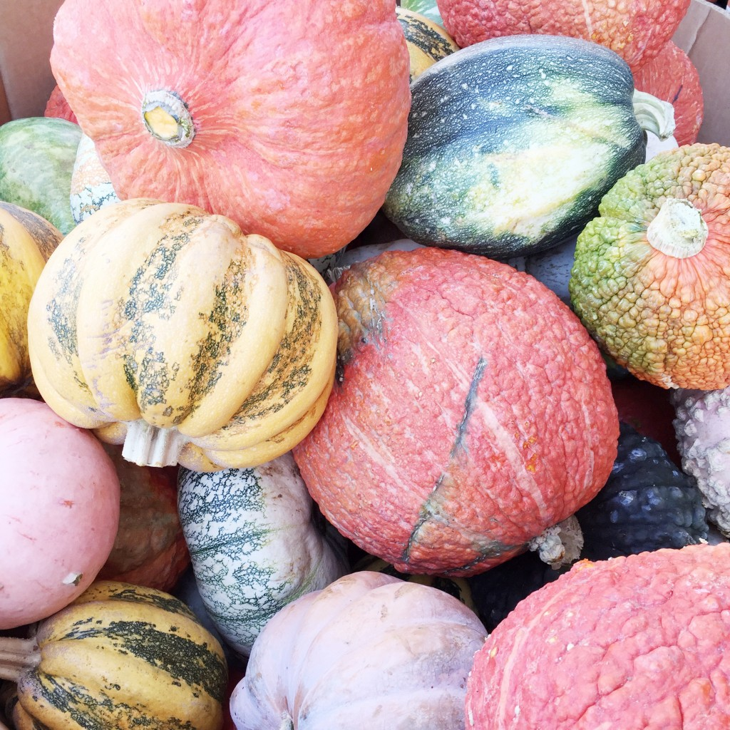 fall bucket list, itsy bitsy indulgences