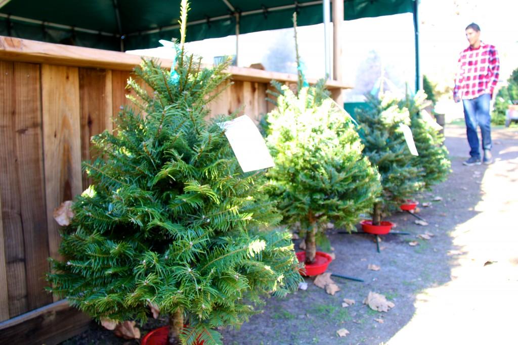 Christmas tree lots, itsy bitsy indulgences