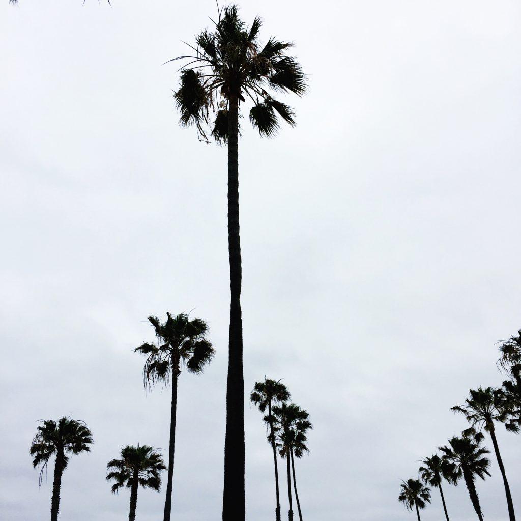 palm trees, itsy bitsy indulgences