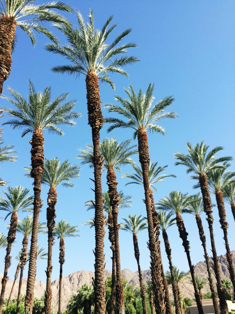 palm springs, itsy bitsy indulgences
