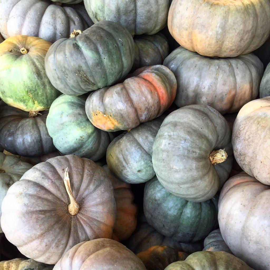 tanaka farms pumpkin patch, itsy bitsy indulgences